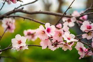 Springtime in Bloom
