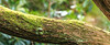 Branches & Moss 1-1 (ianmiddleton1) Tags: tree trunk treetrunk moss green closeup panorama