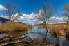 Roselière des Mottets  - Lac du Bourget (Savoie – Avril 2018) (gerardcarron) Tags: 1022 arbres calme canon80d ciel cloud eau hiver lacbourget lake landscape matin morning nature nuages paysage roseaux savoie water winter