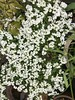 THE GARDEN  - 15/04/18 (PARK@ARTWORKS) Tags: garden westkirby 150418 spring plans flower west kirby