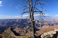 "Grand Canyon national park, Arizona, US August 2017 505 (tango-) Tags: grandcanyon arizona canyon us usa unitedstates america westernamerica west ovest америка соединенныештаты сша 美國""美國""美國 amerika vereinigtestaaten アメリカ 米国米国 соединенные штатысша"