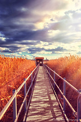 Landscape (-Simulacrum-) Tags: landscape nature sky clouds reeds sunny sunrays sunlight creative beautiful path bridge newjersey nikond5300 nikon sigma sigmalens 170500mmf28 nikonphotography naturephotography park