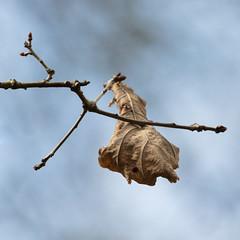 Not Letting Go (Helmuth of Boskone) Tags: brandonmarsh leaf spring twig rugbydistrict england unitedkingdom gb