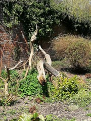 Wood sculpture (daveandlyn1) Tags: garden sculpture bitsofwood walledgarden soil plants pralx1 huawei nationaltrust croftcastle herefordshire