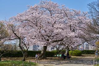 舞鶴公園 / Maizuru Park