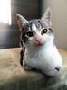 Pablo! (vincenzo.sanci88) Tags: pablo cat gatti animali animals nature indoor europe miao