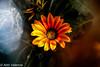 De todo un poco ! ! (aldonso72) Tags: people naturaleza art cat flowers canon