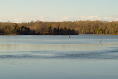 Lake at Curtis Park (dzmears) Tags: trees forest landscape winter peaceful woods water leaves day park lake green pretty clouds
