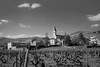 _DSC9132.jpg (jluc60) Tags: noiretblanc beaujolais campagne vignes