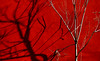 trees III (Rino Alessandrini) Tags: tree red nature backgrounds branch abstract winter season nopeople autumn pattern outdoors plant forest beautyinnature trees shapes shadows branches seasons atmosphere contrast