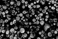 Arbres (c.bouvard) Tags: forêt wood tree arbres
