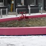 One down, three Flamingo to go - Custard Factory pond thumbnail