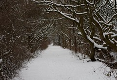 2018 march 18 snow sheffield shirebrook valley  (4) (Simon Dell Photography) Tags: tree tunnel path walk shirebrook valley park snow uk sheffield hackenthorpe s12 simon dell photography 2018 minibeastfromtheeast weather nature wildlife birds narnia winter wonderland spring march 18th
