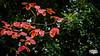 085/365 - Autumn Is Here (4k) (RWGJ) Tags: 169 16x9 2470mmf28 4k autumn black bokeh branch brown color colour cyan d4s dslr depthoffield dof dusk evening fx2470mmf28 fall green hd horizontal landscape leaf leaves naturephotography nikkor nikon nikond4s nikonfx2470mmf28 orange outdoor red twilight uhd ultrahighdefinition wallpaper wallpaper169 white medowie newsouthwales australia au