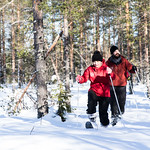 Off-track skiing in the forest_ thumbnail
