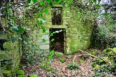 DSC_7916 (seustace2003) Tags: baile átha cliath ireland irlanda ierland irlande dublino dublin éire glencullen gleann cuilinn st patricks day lá fhéile pádraig