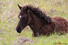 Young Colt (cameralady) Tags: horse horses wildhorses colt sweetwaterwetlands