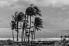 A Couple Looking at the Beach, Kauai, Hawai'i, USA (takasphoto.com) Tags: 80400mmf4556dvr afvrzoomnikkor80400mmf4556ded america arena bw beach blackwhite blackandwhite blancoynegro bãibiển coast coastal cobblestones color couple d610 eeuu estadosunidos fullframe gente grava gravel greenplants hawaii human humanbeing island kauai kauaʻi kingdomplantae landform lens mar mare mer monochrome nature nikkor nikkor80400mm nikkor80400mmf4556dafvred nikkorlens nikon nikond610 noiretblanc northamerica ocean oceansea oceanea oceano outdoor people pacific pacificocean palm palmtree palmtrees pebbles