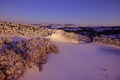 whaley evening (Ron Layters) Tags: whaleymoor snow winter whaleybridge evening sunset gorse drifts snowblasted wall gate pink alpenglow drystonewall hawkhursthead glow hawkhurstfarm purple landscape combsmoss ladderhill peakdistrict derbyshire england unitedkingdom highpeak slidefilmthenscanned slide transparency fujichrome velvia canoneos300v canon eos300v rebelti ronlayters highestpositioninexplore88onthursdaymarch292018 explored interesting explore 2k 5k 10k