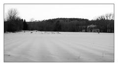 Roe Deers At Dusk (Eline Lyng) Tags: winter snow dusk nature landscape deer animal roedeer blackandwhite bw monochrome monochrom leica m m240 leicam240 rangefinder manualfocus summilux50mmasphf14 50mm rural norway ngc