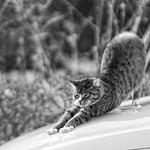 20180330-164421 - Car Cat Bokeh thumbnail