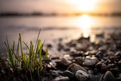 Abends am Rhein (Rafael Zenon Wagner) Tags: fluss river rhein rhine düsseldorf germany light licht gegenlicht sonne sun sonnenuntergang sundown wasser water steine stones gras dof 28mm 14 bokeh 1849
