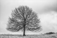 Old Friend... (Ody on the mount) Tags: anlässe bäume em5ii fototour hdr himmel mzuiko2518 omd olympus pflanzen schwäbischealb silhouette wolken bw clouds monochrome sw sky trees metzingen badenwürttemberg deutschland de