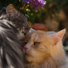 Stand by me (FocusPocus Photography) Tags: linus fynn katze kater cat chat gato tier animal pet brüder brothers freunde friends trost comfort haustier