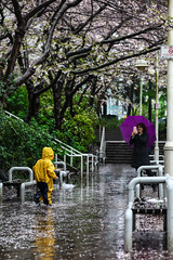 Raining (Photo Alan) Tags: vancouver raining cherry cherryblossom sakura trees street streetphotography people streetpeople reflection rain flowers tree kids childhood