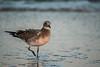 One more step (Resad Adrian) Tags: step ocean city bird seagull