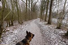 Aan de rand van het bos (Marja S) Tags: kasteelbrakel brakelsbos landgoedbrakel brakel gelderland