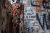 dried fruit (tbolt-photography.com) Tags: derelict derp derelictplaces derelictbuildings decay abandoned abandonedplaces abandonedbuildings urbex urbandecay nikon