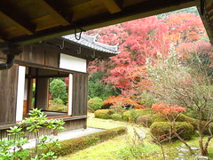 IMG_2270 (hattiebee) Tags: japan nara traditional wooden building garden autumn foliage momiji maple leaves