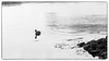 Young Swan (Eline Lyng) Tags: animal swan coastline beach seascape nature larkollen norway sunset leica m m240 leicam240 leicalens rangefinder aposummicron75mmf2 75mm bw blackandwhite monochrome monochrom dof highkey