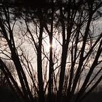 Forêt unifiée thumbnail