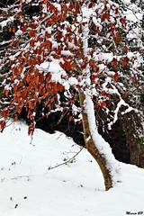 Photos Marco BP (8)_GF (marcbihanpoudec) Tags: bretagne neige plabennec plan deau lac banc arbres