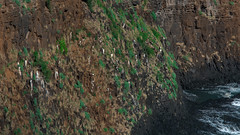 Hawaii USA - Kauai Island. Kīlauea Point (Feridun F. Alkaya) Tags: hawaii kauaiisland wailuafalls kauaisspirit forest waimeacanyonstatepark waimea waimeacanyon hawaiiisland ngc landscape canyon road kauaı grass soil aloha kīlaueapoint usa hawaiiislands lighthouse worldheritagelist unescoheritagelist unesco unc kohala mauna hualalai kilauea volcanos garden sky flower honolulu waikikibeach beach