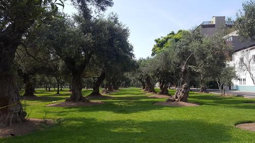 Lima - Parque El Olivar