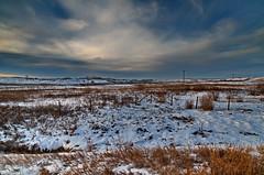 Nose Creek Winter Sky (Bracus Triticum) Tags: nose creek winter sky calgary カルガリー アルバータ州 alberta canada カナダ 11月 十一月 霜月 jūichigatsu shimotsuki frostmonth autumn fall 平成29年 2017 november
