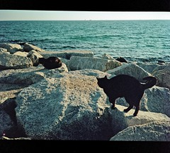 0302_30-01-2018_Fuji GS645S expired 02-2008 Kodak Portra 160VC_Barcelona_819 (nefotografas) Tags: fujigs645s expired 022008 kodakportra 160vc weekend trip barcelona catalunia analoguephotography istillusefilm istillshootonfilm cats