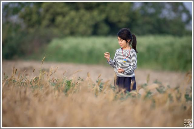 3月台南 親子寫真可以這樣拍 木棉花 蜀葵 小麥 一次讓你拍個夠 (68)