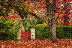 Secret Garden (Darkelf Photography) Tags: mount wilson blue mountains australia nsw newsouthwales autumn fall leaves landscape trees nature garden gate travel outdoors canon 24105mm 5div maciek gornisiewicz darkelf photography secretgarden 2017
