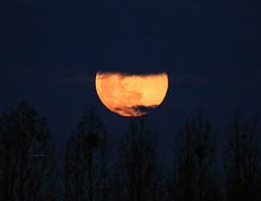 Poem to the moon (Robyn Hooz (away)) Tags: luna moonrise sorgere padova argine 600mm poesia poem romance sigh sospiro disco nuvole clouds