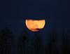 Poem to the moon (Robyn Hooz) Tags: luna moonrise sorgere padova argine 600mm poesia poem romance sigh sospiro disco nuvole clouds