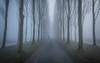 Out of the mist (koos.dewit) Tags: nl 2018 fujifilm fujifilmxt2 fujinonxf1024mm groningen koosdewit thenetherlands biker koosdewitnl landscape mist misty