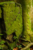 Within the Sanctuary (Triple_B_Photography) Tags: canon eos 7d bali sangeh forest forrest moss stone wall tropical leaves