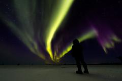 Solar Storm Silhouette  9290 (Dr DAD (Daniel A D'Auria MD)) Tags: aurora auroraborealis northernlights arctic subarctic landscapes manitoba churchill canada solarwind solarwinds drdadbooks danieladauriamd march2018