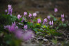 20180318-DS7_0344.jpg (d3_plus) Tags: bokeh aiafzoomnikkor80200mmf28sed d700 thesedays wildflower 日常 walking 城山 ボケ 相模原 望遠 カタクリ 自然 景色 dogtoothviolet sagamihara trekking 神奈川県 sky telephoto 山野草 風景 japan erythroniumjaponicum ニコン トレッキング nature dailyphoto ハイキング nikon nikond700 kanagawa flower nikkor shiroyama 8020028 dogtoothvioletvillage bloom 植物 80200mmf28d 散歩 80200mmf28af plant 花 scenery 80200mmf28 daily 城山かたくりの里 hiking 80200 日本 tele 80200mm かたくりの里 空