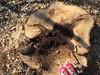Red oak (Run2Find) Tags: redoak