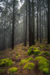 Magic forest (Rico the noob) Tags: 2018 rock d850 landscape nature mist outdoor 2470mmf28 trees wood tree travel forest published dof sky fog teneriffa 2470mm stones tenerife